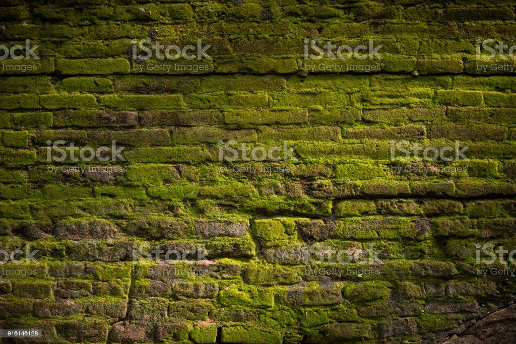 brick wall – zdjęcie