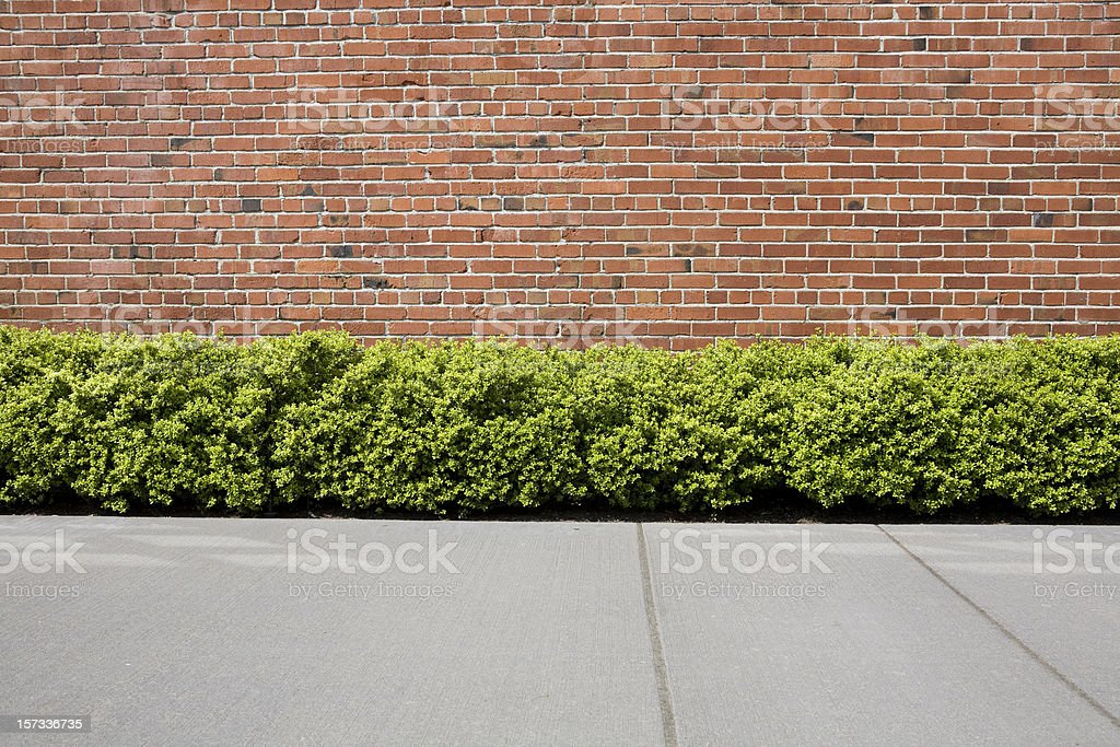 Brick wall with hedge shrubs as background or backdrop stock photo