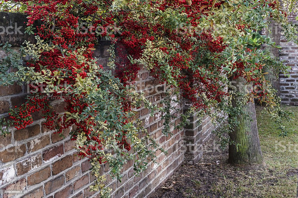 Brick Wall with Red and Green Foliage royalty-free stock photo