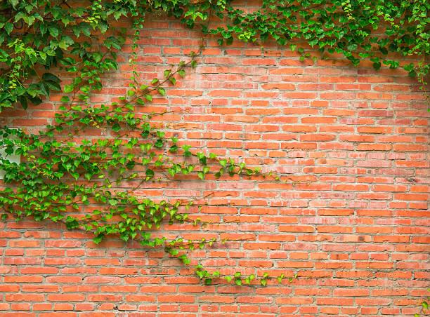 parede de tijolos - ivy building imagens e fotografias de stock