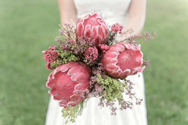 brautstrauß - protea strauß stock-fotos und bilder