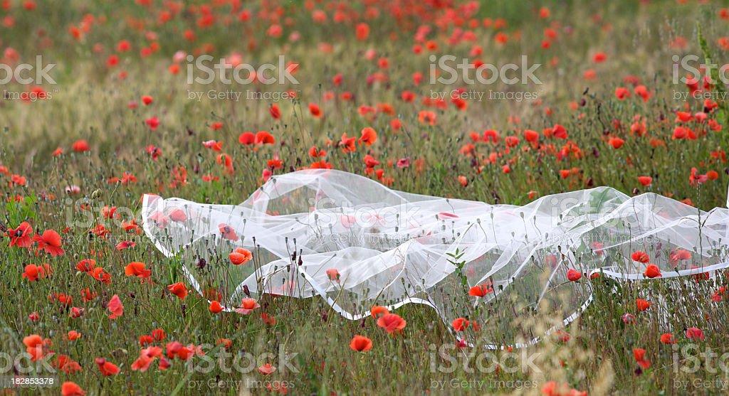 Bridal Veil royalty-free stock photo