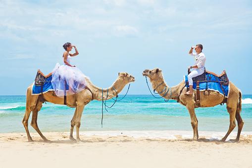 Braut Und Bräutigam Auf Kamele Am Strand Stockfoto und mehr Bilder von 2015