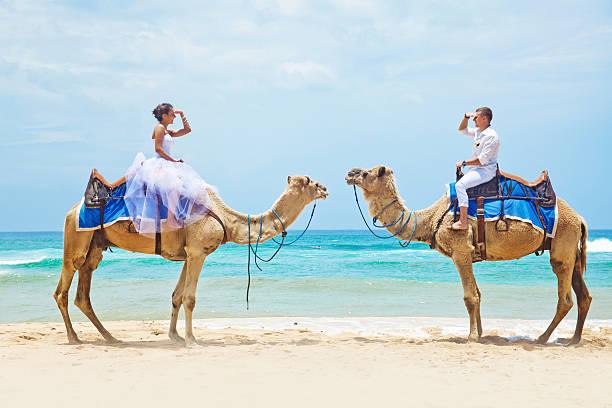 Braut und Bräutigam auf Kamele am Strand – Foto