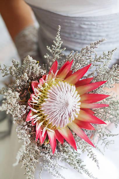 braut hält ihr wunderschönen protea blumenstrauß - protea strauß stock-fotos und bilder