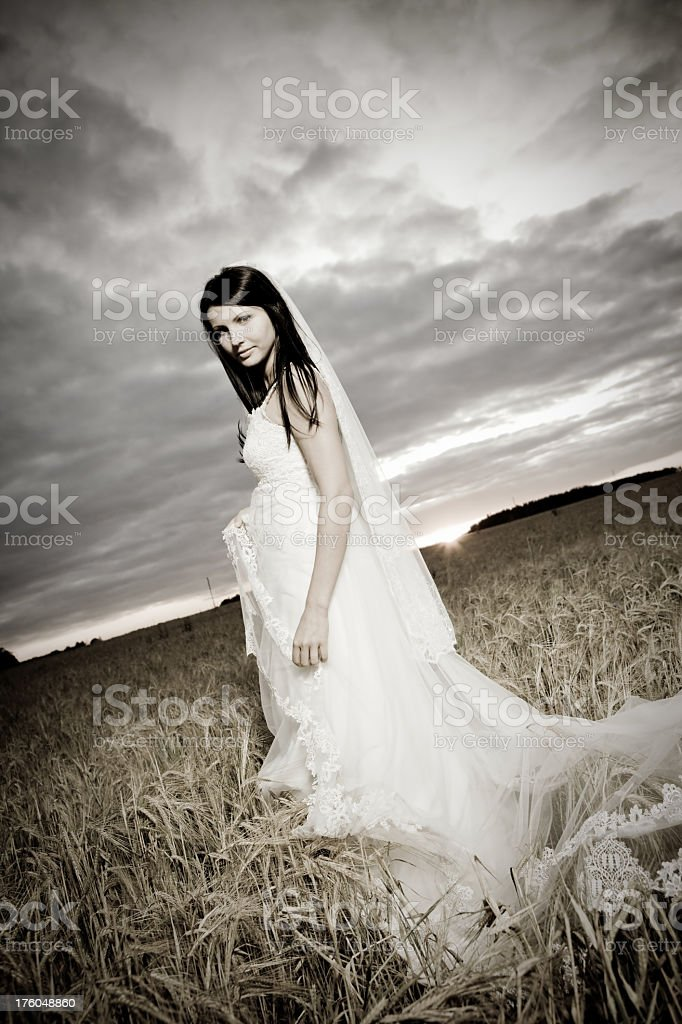 Bride in a cornfield royalty-free stock photo