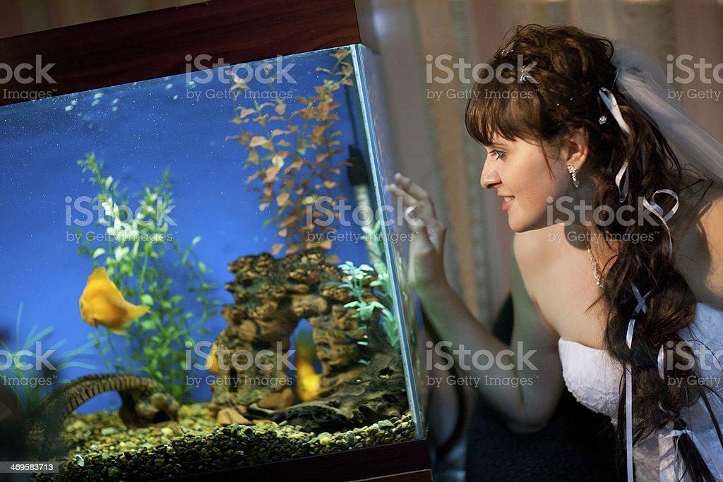 Braut auf das aquarium – Foto