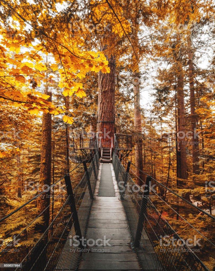 bridge among the tree in autumn stock photo