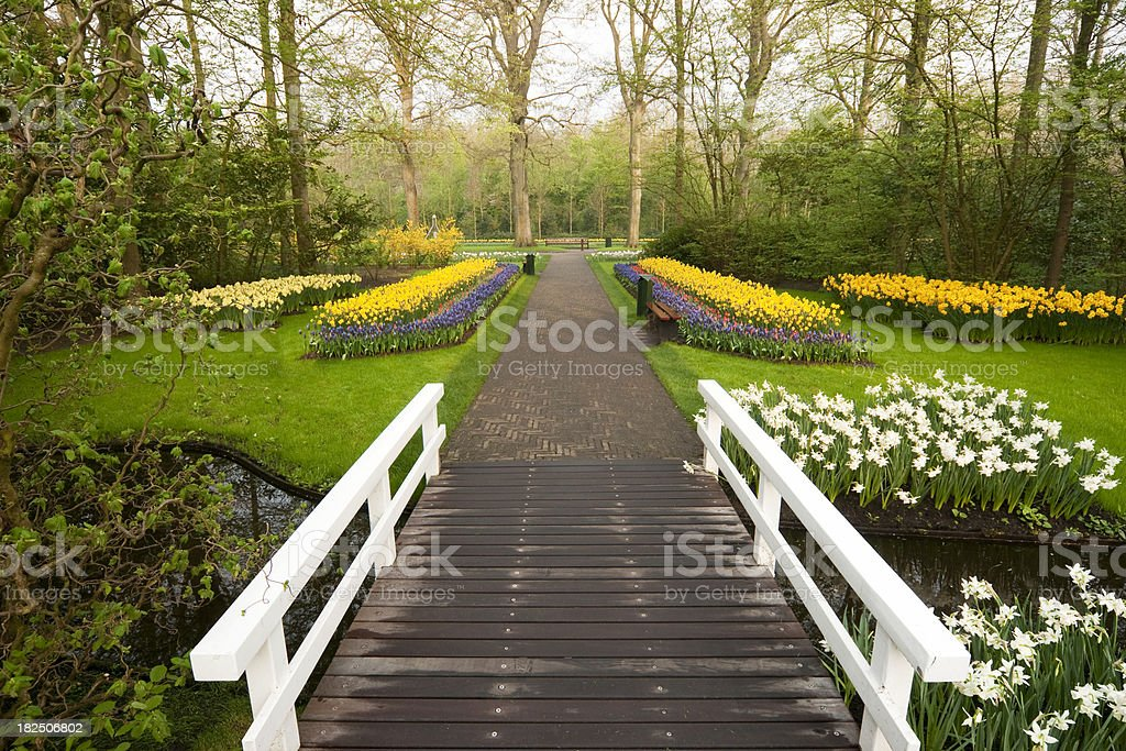 Bridge and flower bed of  tulips. stock photo