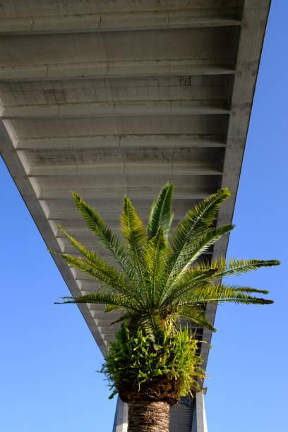 Bridge and Palm Tree stock photo