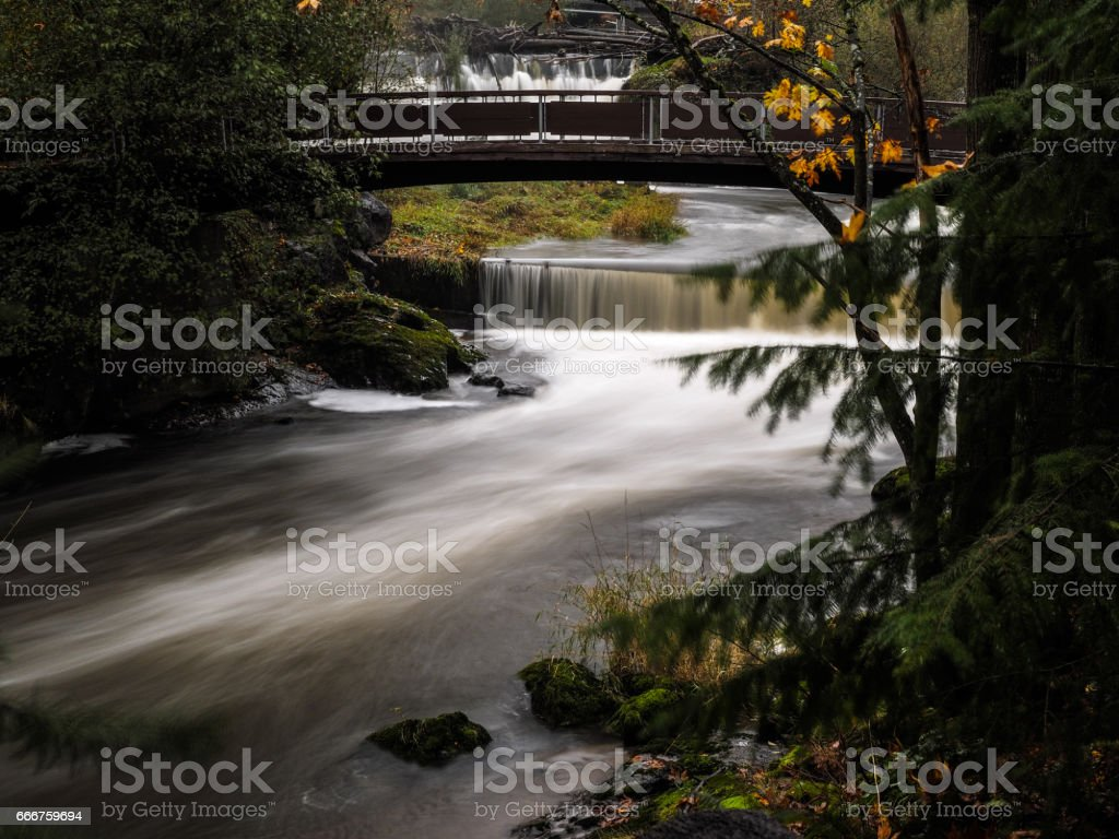 Bridge And River In Forest foto stock royalty-free