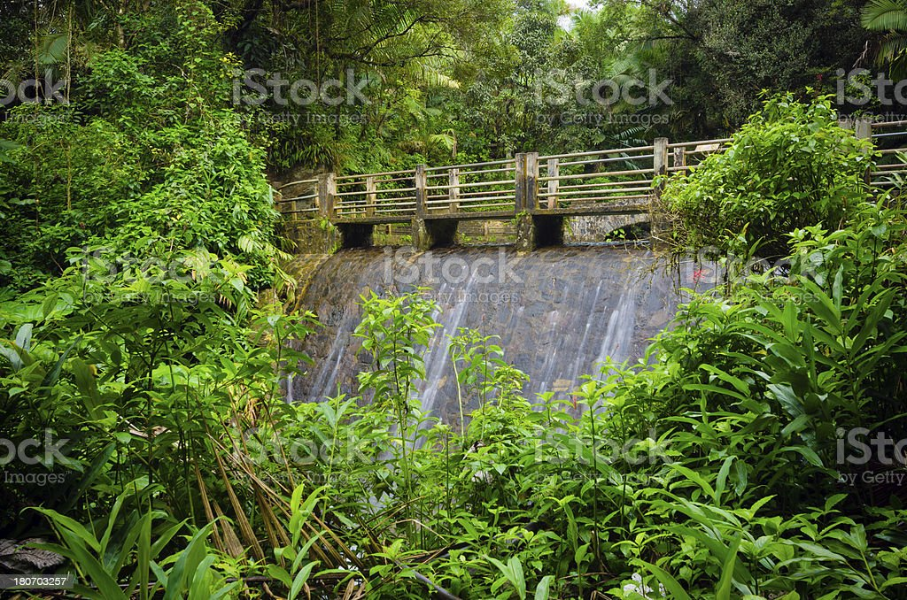 Bridge at El Yunque National Forest in Puerto Rico royalty-free stock photo
