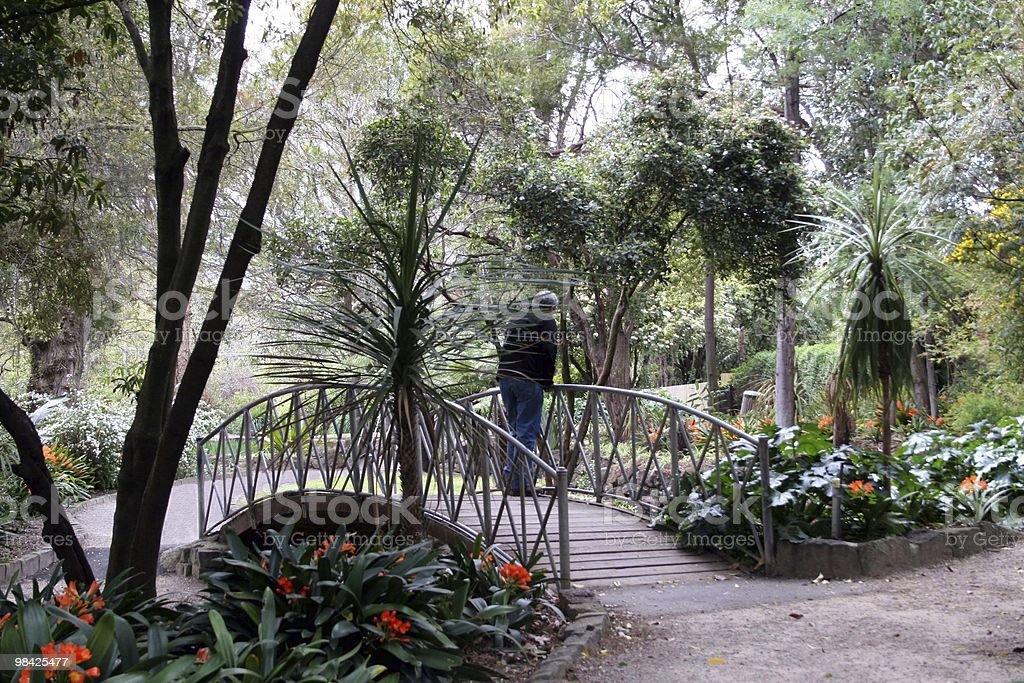 Bridge at the park royalty-free stock photo