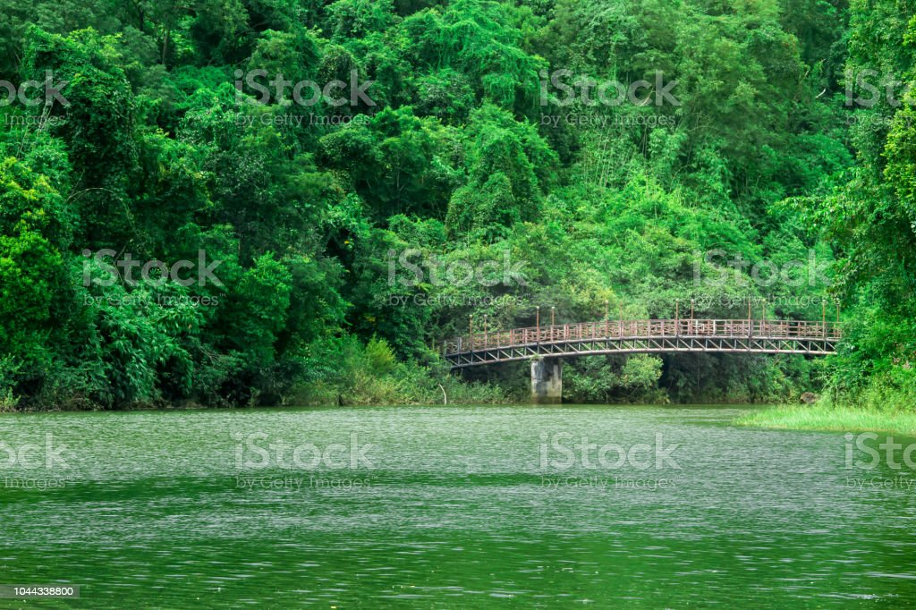 bridge to cross over the river in a forest landscape