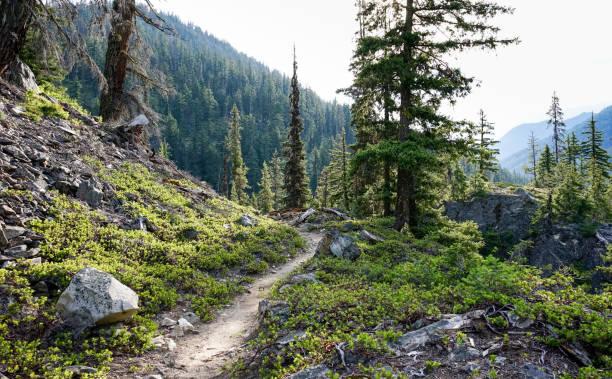 bridge creek trail, pacific crest trail, north cascades national park, washington state, usa - pacific crest trail stock-fotos und bilder