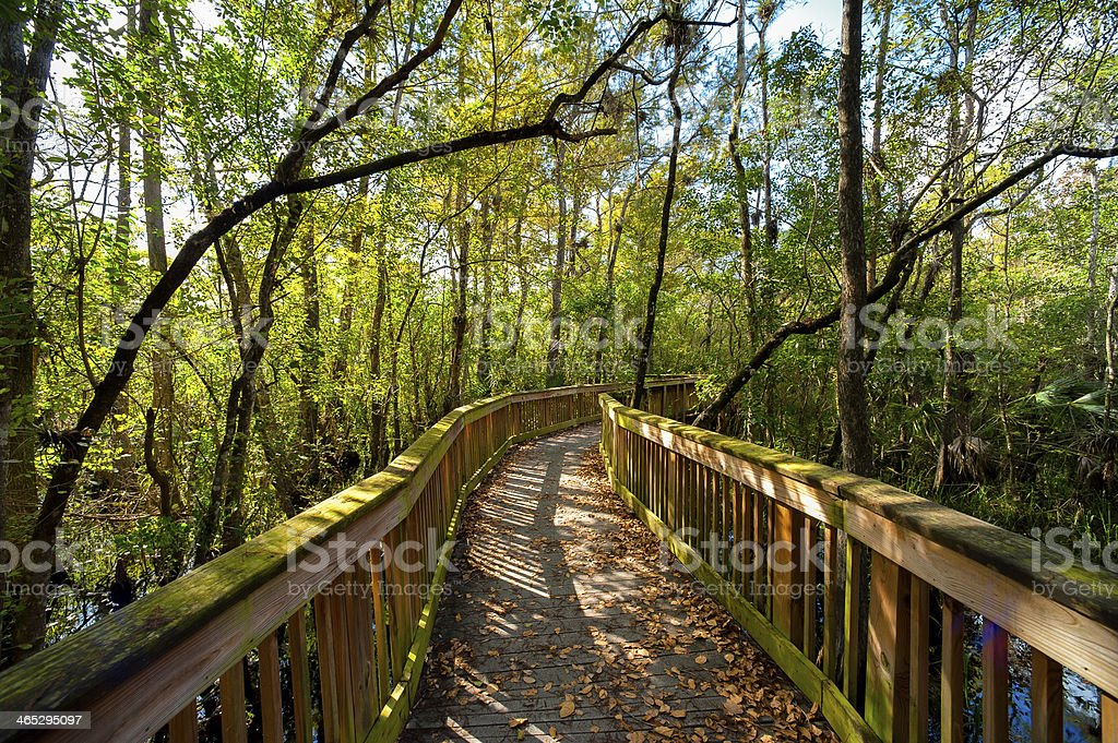 Bridge in a forest stock photo
