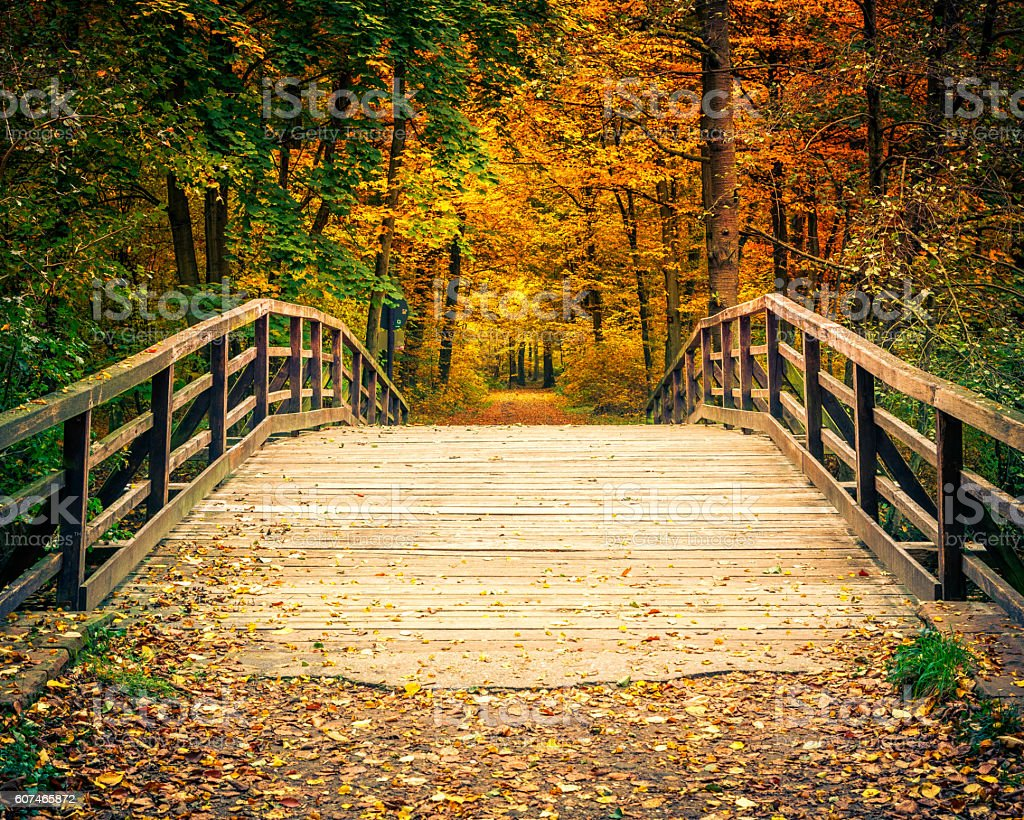 Bridge in autumn forest stock photo