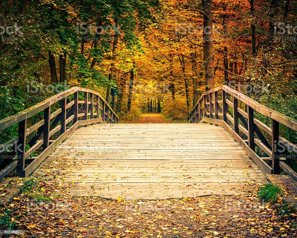 Brücke im Herbst Wald – Foto