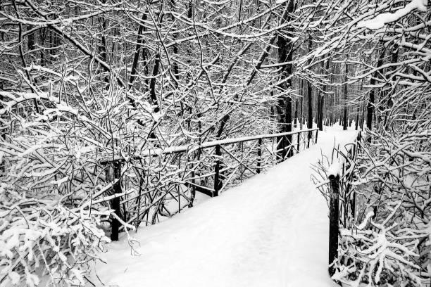 Brücke im Stadtpark am Wintertag schwarz-weiß – Foto
