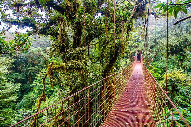 Selva puente de Monteverde-Costa Rica - foto de stock