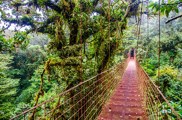 Bridge in Rainforest Monteverde - Costa Rica