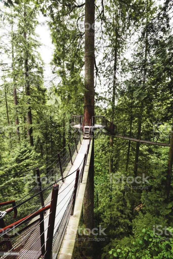 bridge in the forest in british columbia stock photo