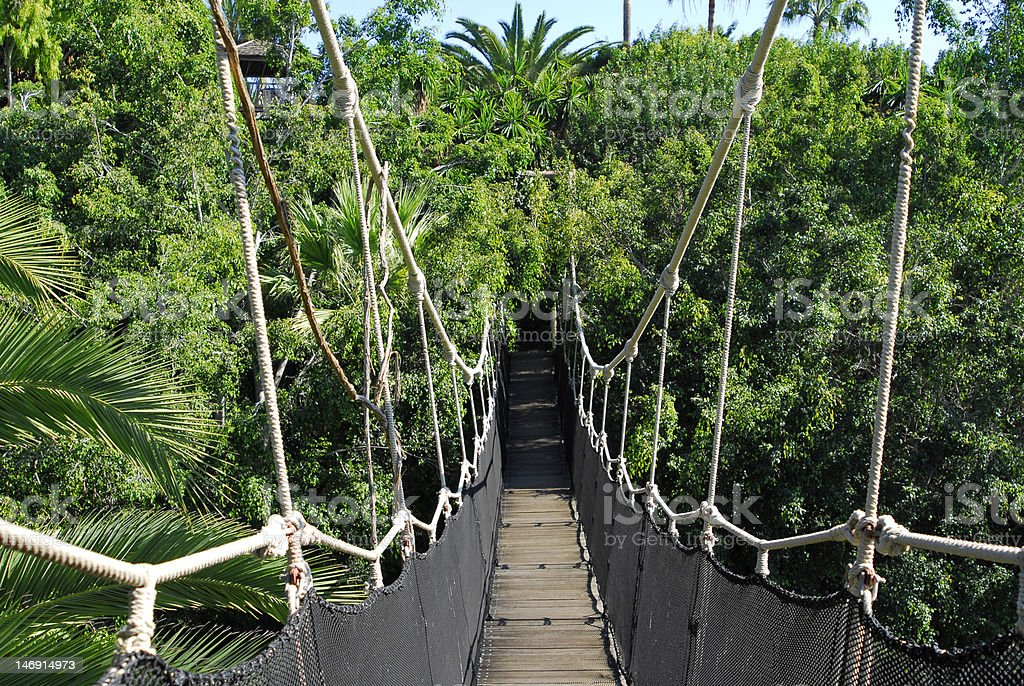 bridge in the jungle royalty-free stock photo