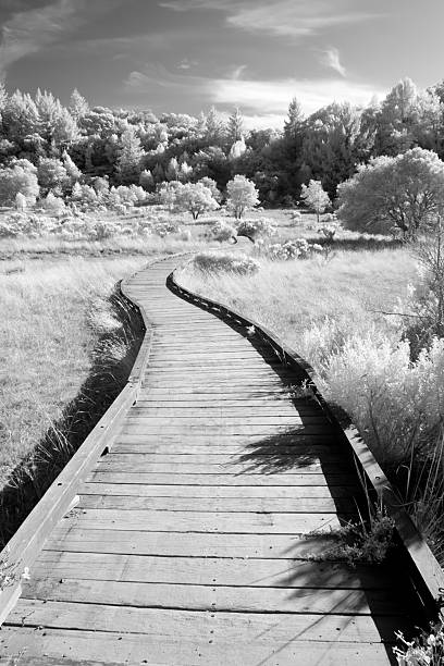Bridge in the Meadow stock photo