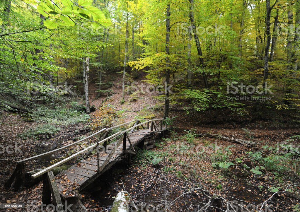 Bridge in the woods royalty-free stock photo