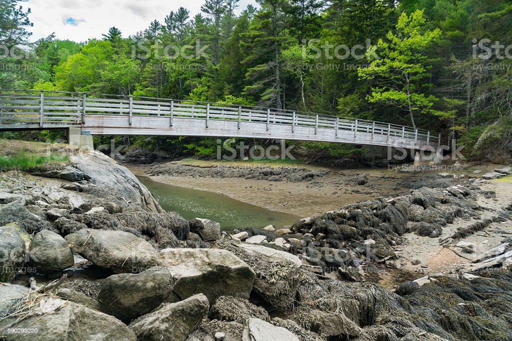 Bridge into Green Forest Стоковые фото Стоковая фотография