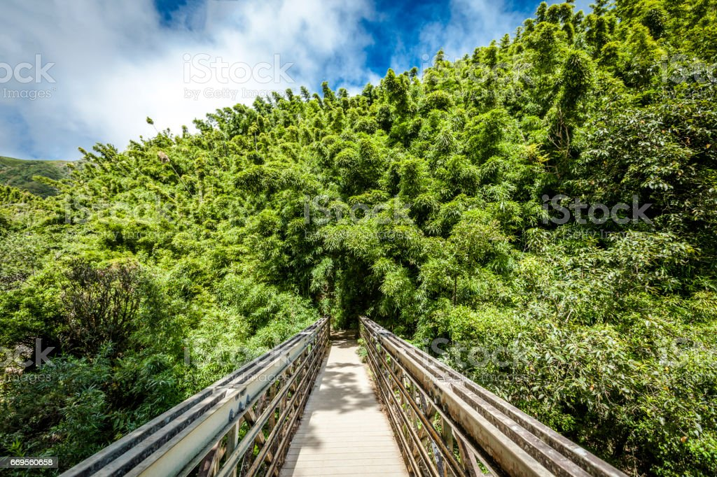 bridge into the bamboo forest stock photo