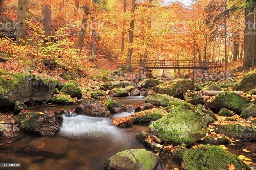 Bridge over Stream in Forest at autumn - Nationalpark Harz stock photo