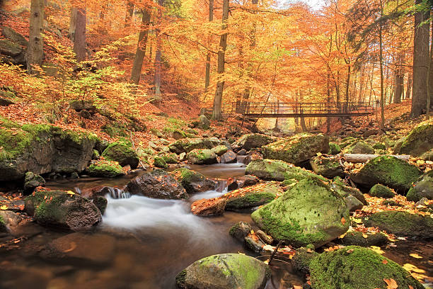 bridge over stream in forest at autumn - nationalpark harz - harz stock-fotos und bilder