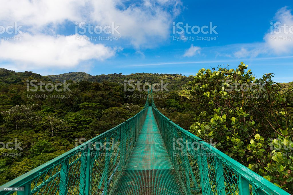 Bridge over the canopy of trees in Monteverde, Costa Rica stock photo