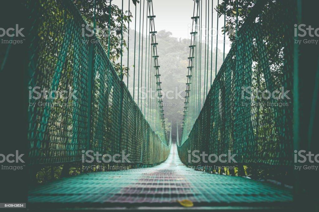 Bridge over the rainforest stock photo