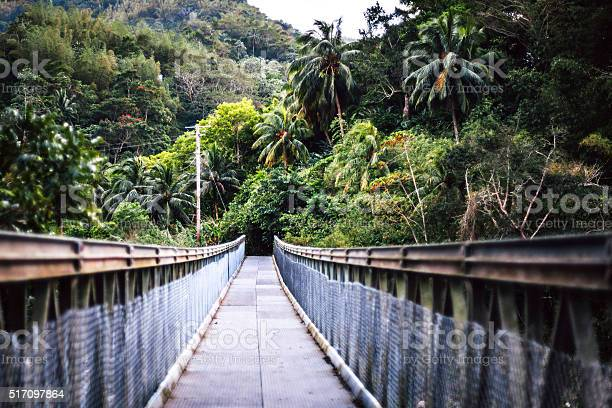 Bridge over the river in jungle jamaica picture id517097864?b=1&k=6&m=517097864&s=612x612&h=8rvvujupec5lifv2wknppwph9v1poxz1wjdbvqnvg5e=