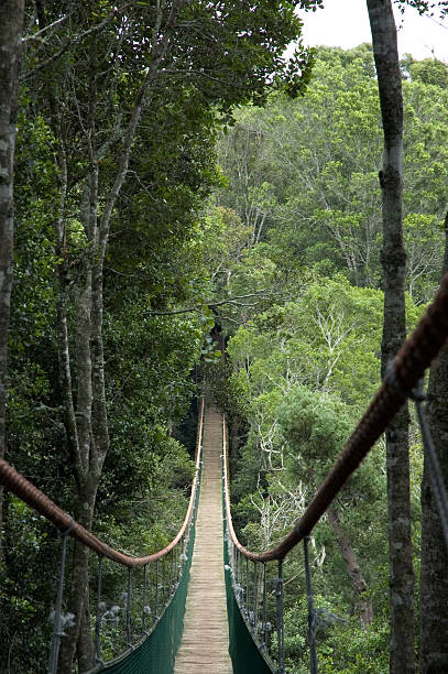 Bridge to Beyond Suspension bridge in Monkeyland Primate Sactuary in The Crag, South Africa. aegis stock pictures, royalty-free photos & images