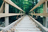 Bridge to forest