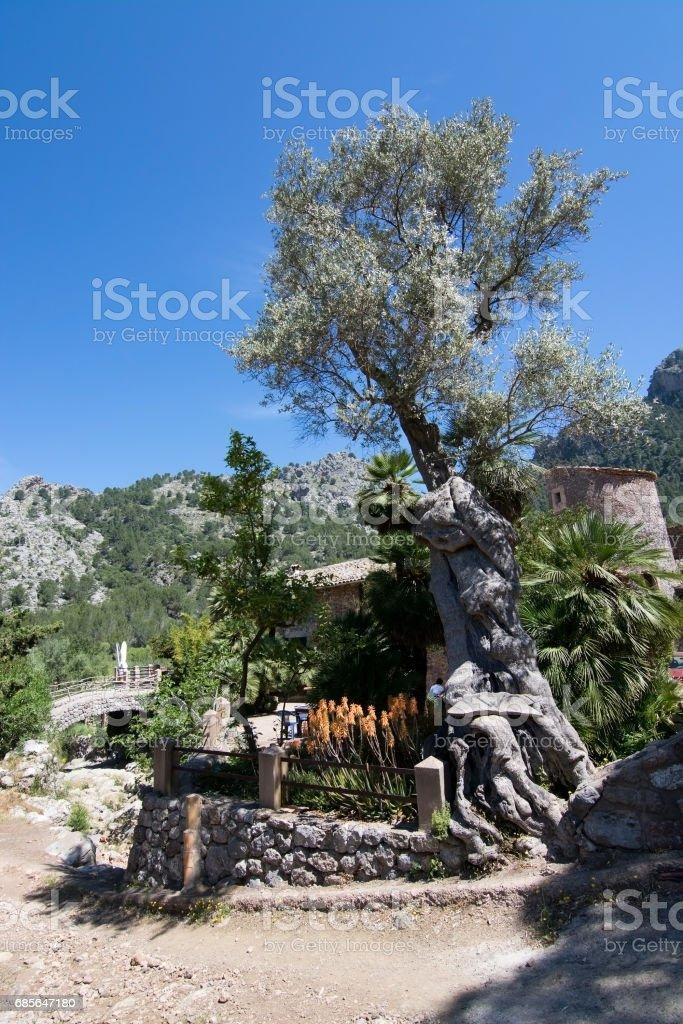 Bridge view Mallorca royalty-free 스톡 사진