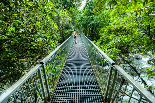 A Bridge with a person in the Daintree Rainforest