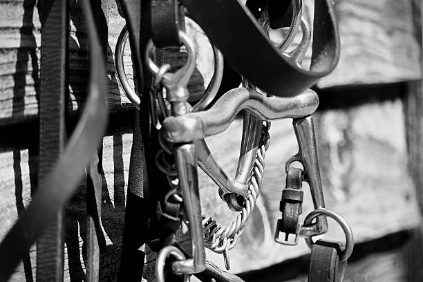 bridle - horse bit stock photos and pictures