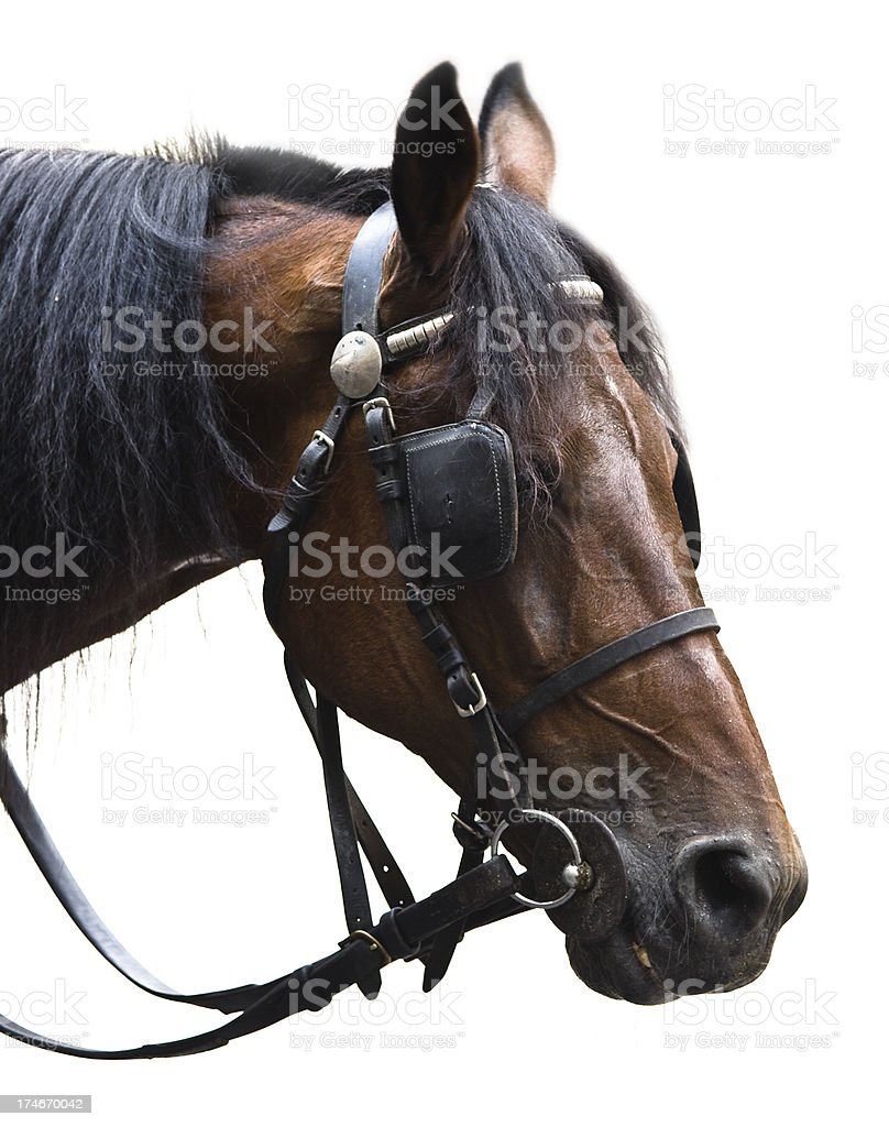 Bridled horse portrait stock photo