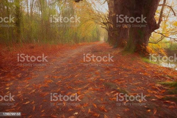 Photo of Bridle/foot path in the mist