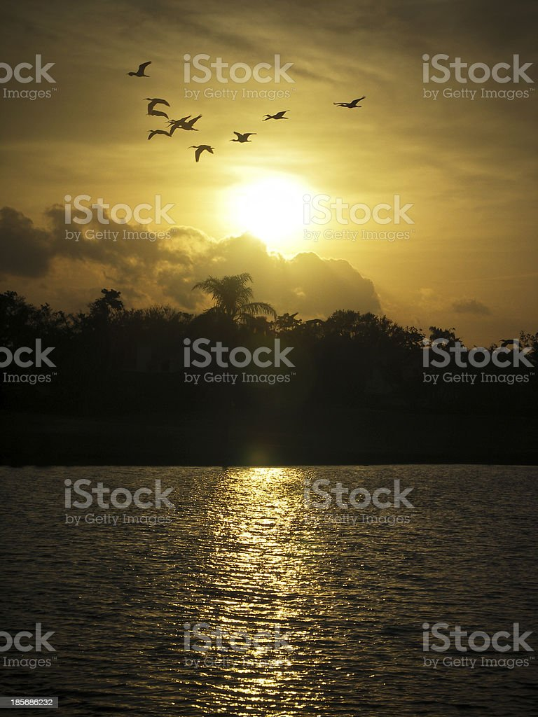 Brids flying at sunset over lake. stock photo