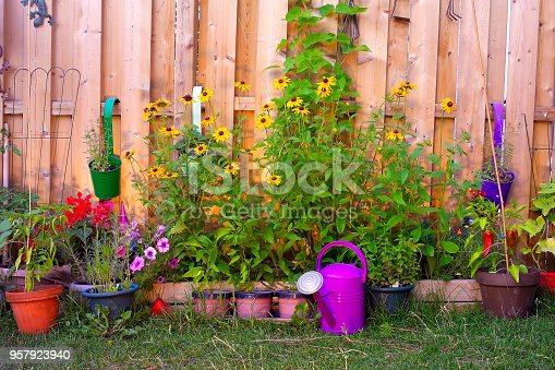 Flowers, watering can, and vegetables in this beautiful fenced corner of a garden.