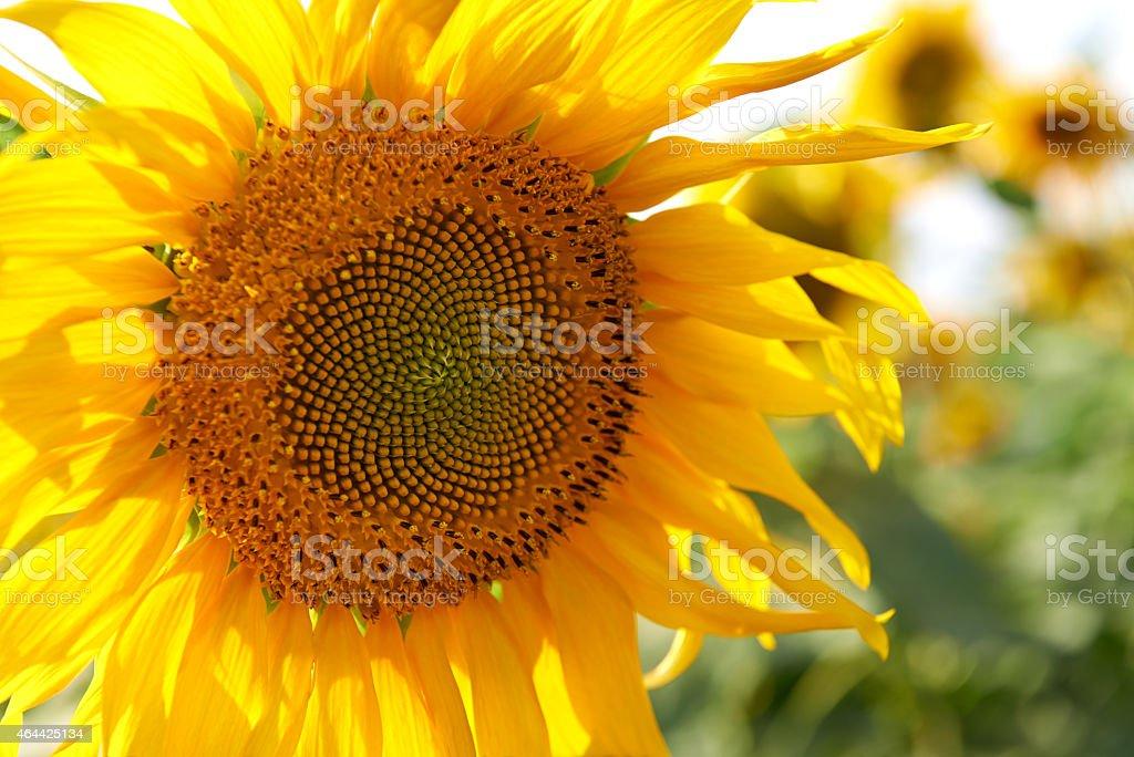 Bright and beautiful stock photo