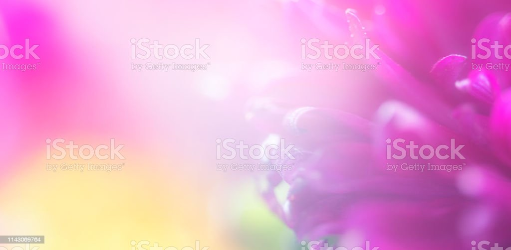 Bright and Bold Abstract Flower Background stock photo