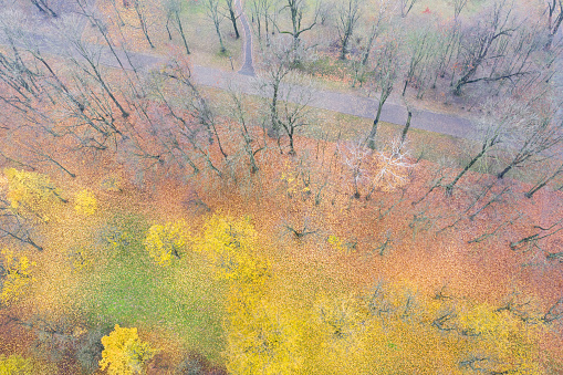 bright and colorful autumnal landscape with trees and colorful foliage on ground