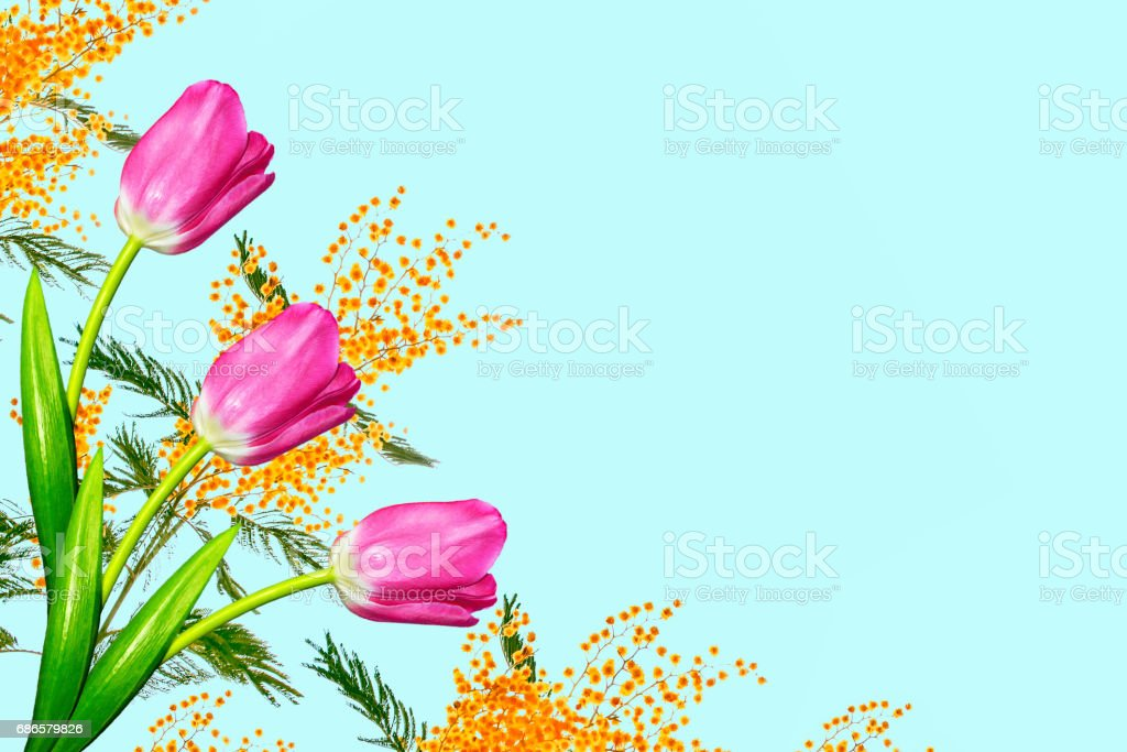 Bright and colorful flowers royalty-free stock photo