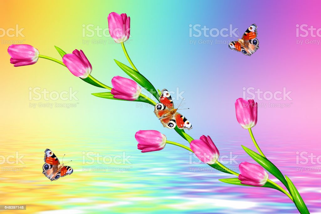 Bright and colorful flowers tulips - foto de acervo